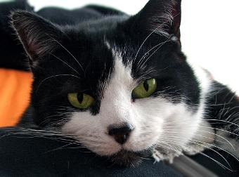 Minnie the cat