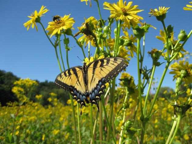 butterfly_flowers