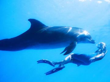 dolphin_med
