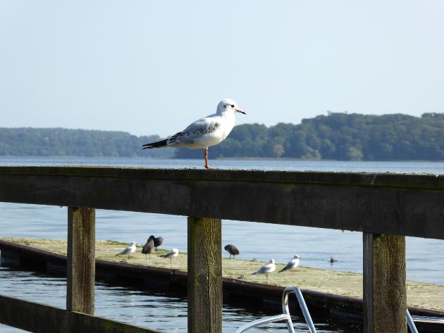 lake-bird
