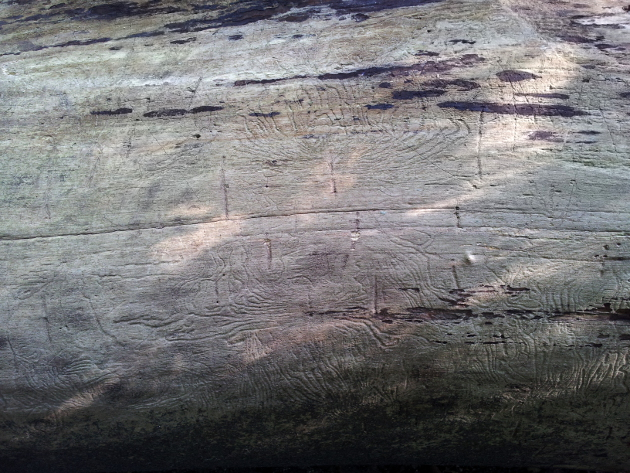 lake-tree-symbols
